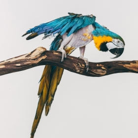 Earthbound | Portrait Series of Captive Birds